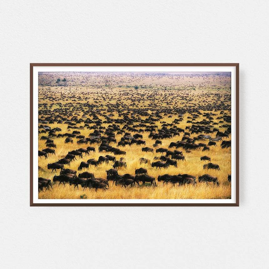 Fine art photographic print by Jonathan and Angela Scott, depicting wildebeest crossing the savannah in Maasai Mara, Kenya.