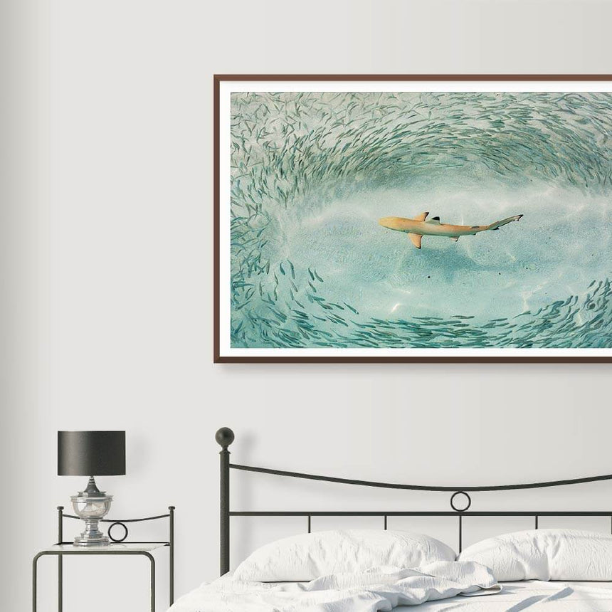 Limited edition photographic print by Jonathan and Angela Scott, depicting an underwater shark and small fishes in Maldives.