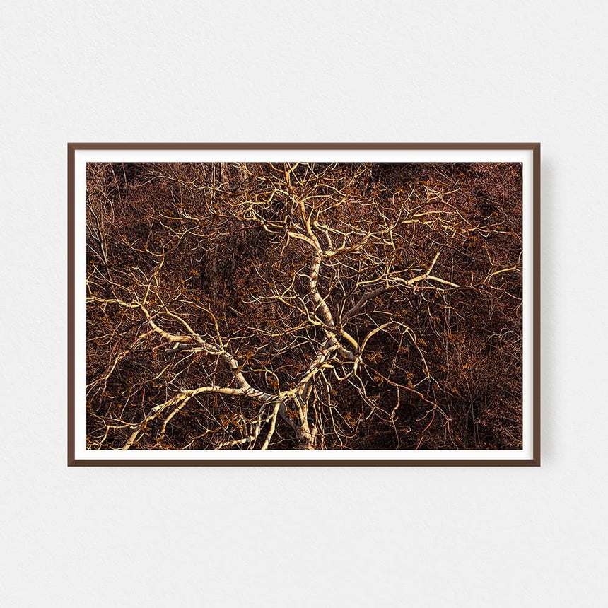 Fine art photographic print by Jonathan and Angela Scott, depicting a leopard through the leaves in Maasai Mara, Kenya.