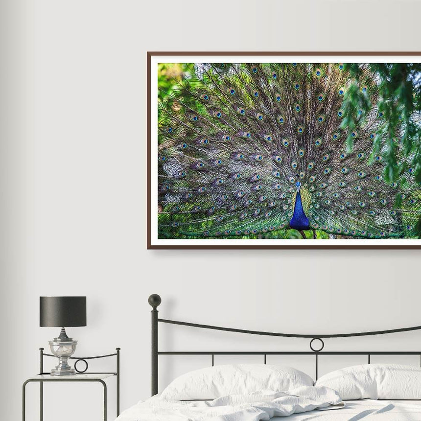 Fine art photographic print by Jonathan and Angela Scott, depicting a stunning peacock displaying his multicolored feathers.