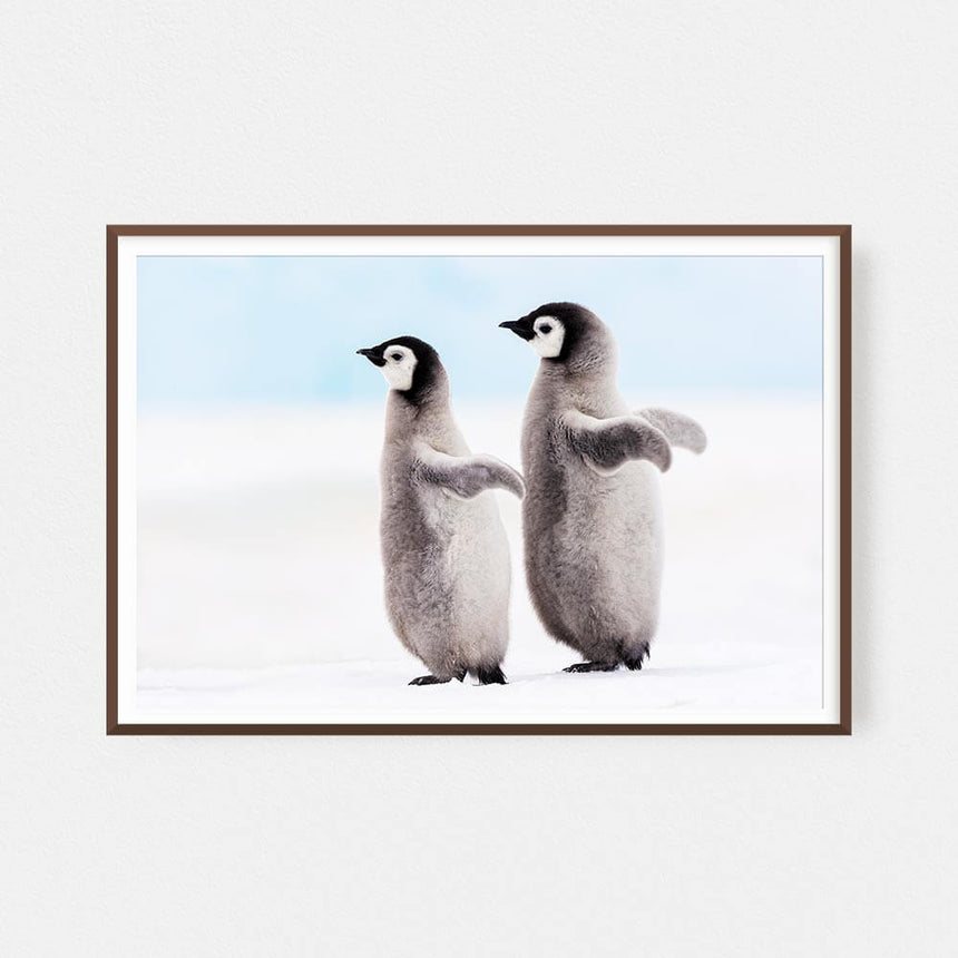 Fine art photographic print by Jonathan and Angela Scott, depicting a playful seal in Antarctica.