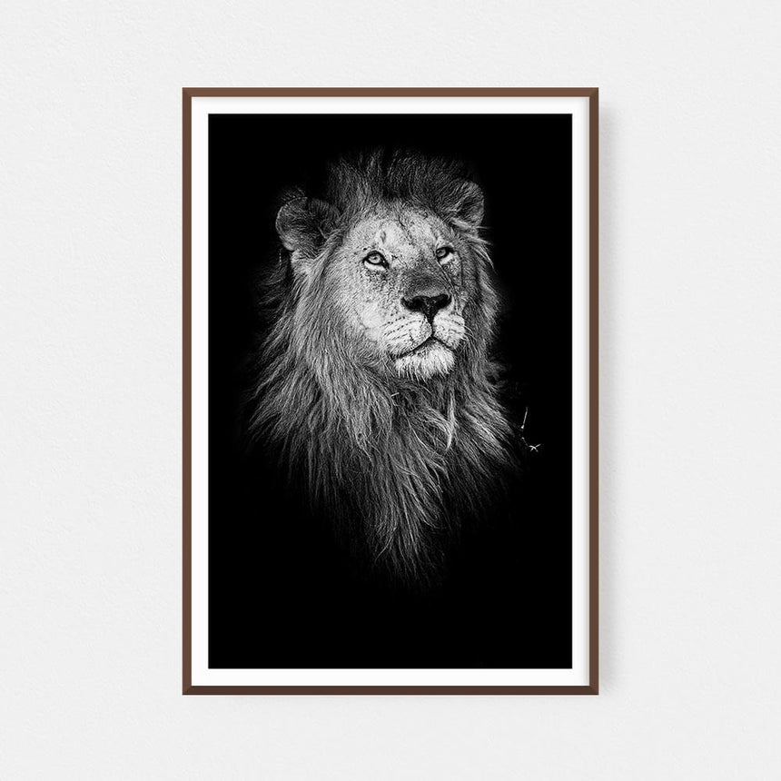 Fine art photographic print by Jonathan & Angela Scott, depicting a stunning black & white portrait of a male lion in Kenya.