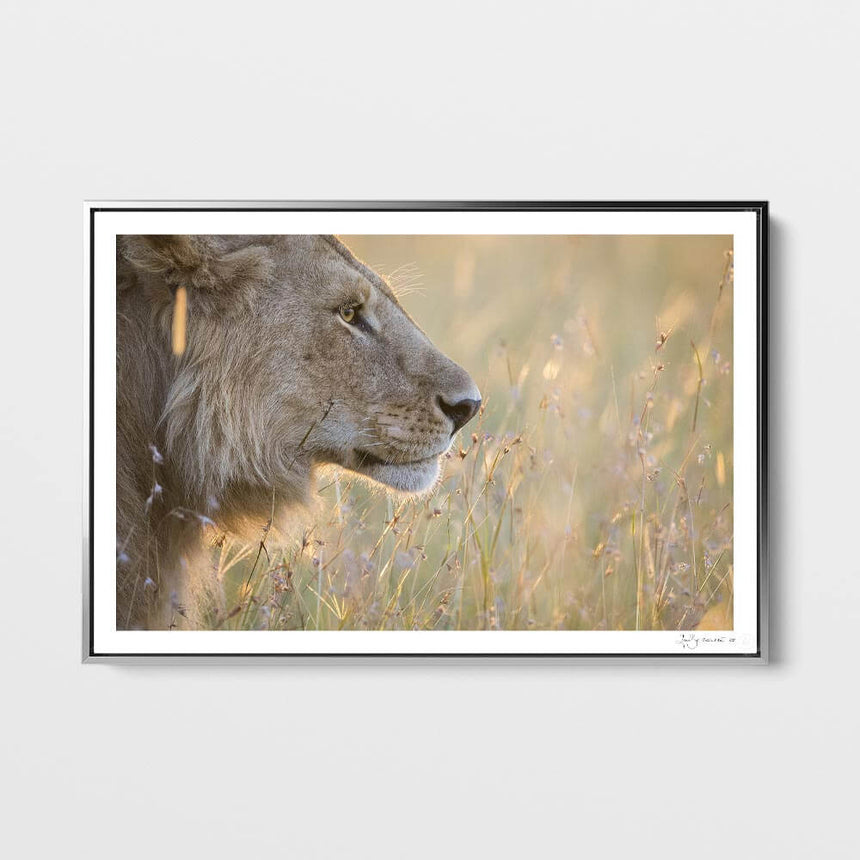 Limited edition photographic print by Jonathan and Angela Scott, depicting a lioness on a granite outcrop in Tanzania.