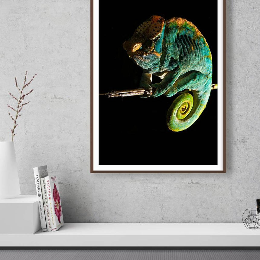 Fine art photographic print by Jonathan and Angela Scott, depicting a colorful Parson's chameleon on a branch in Madagascar.