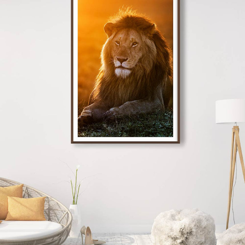 Fine art photographic print by Jonathan and Angela Scott, depicting a stunning male lion in Maasai Mara, Kenya.