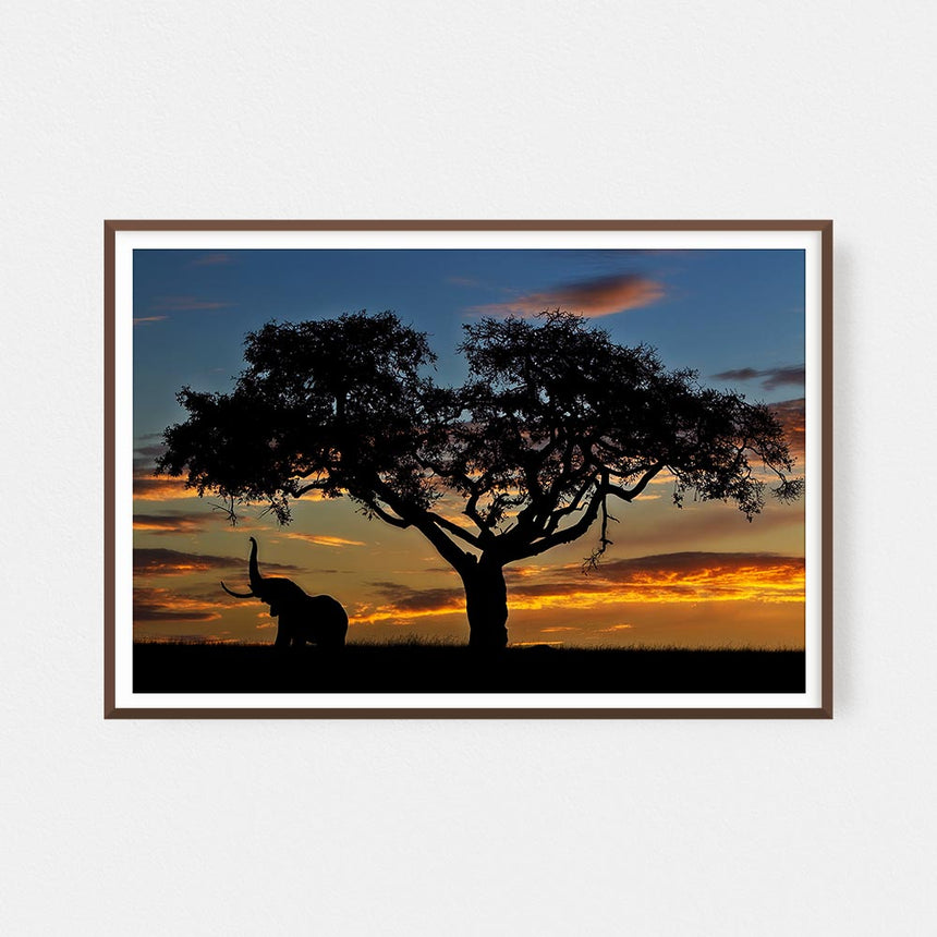 Fine art photographic print by Jonathan and Angela Scott, depicting an elephant under a fig tree in Maasai Mara, Kenya.