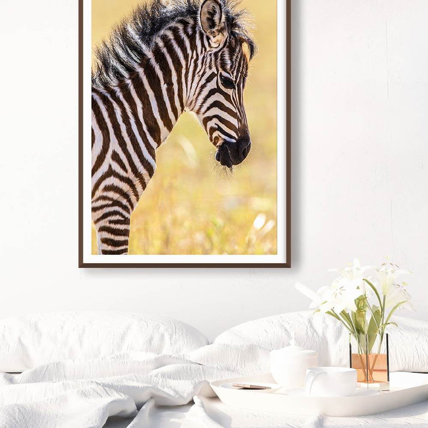 Fine art photographic print by Jonathan and Angela Scott, depicting an adorable zebra foal in Maasai Mara, Kenya.