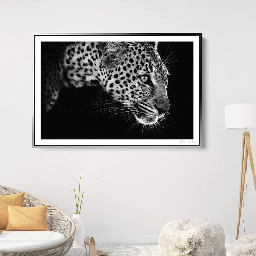 Limited edition photographic print by Jonathan and Angela Scott, depicting a black & white leopard portrait in Maasai Mara, Kenya.