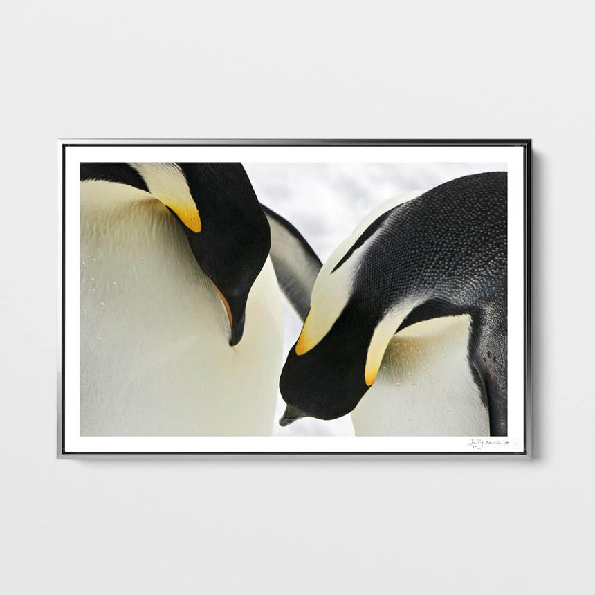 Limited edition photographic print by Jonathan and Angela Scott, depicting 2 emperor penguins in Ross Sea, Antarctica.