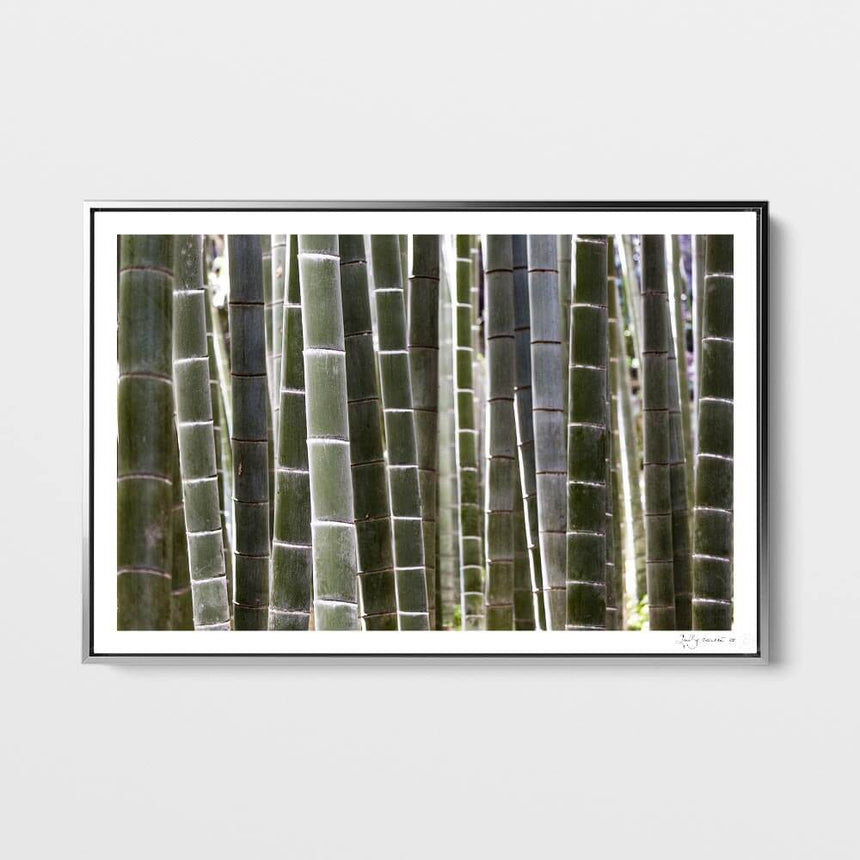 Limited edition photographic print by Jonathan and Angela Scott, depicting a beautiful bamboo forest in Japan.