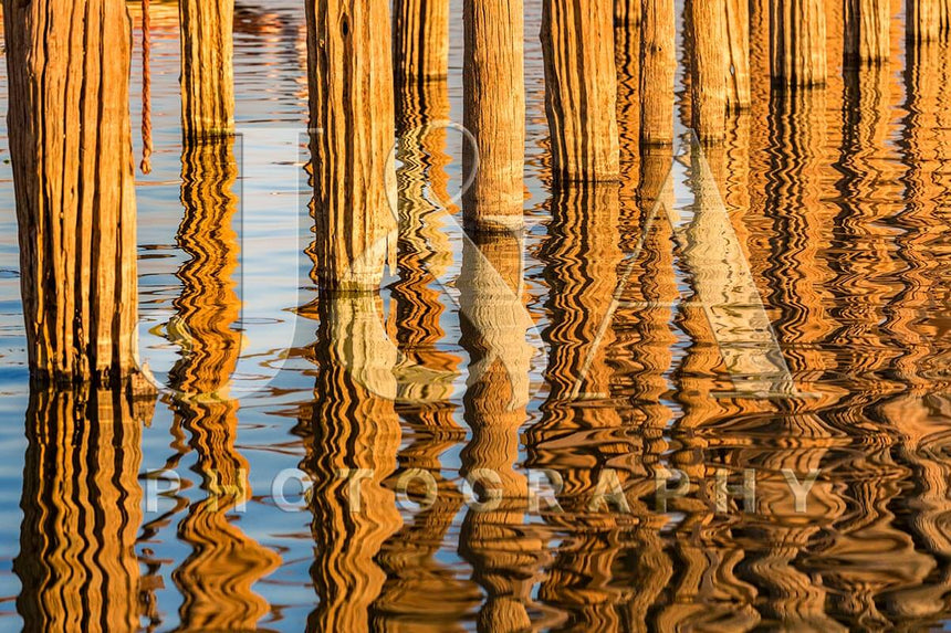 Fine art photographic print by Jonathan and Angela Scott, depicting a palm gleaming gold in the sunlight in Sri Lanka.