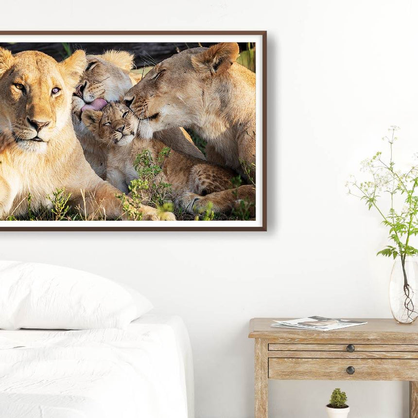 Fine art photographic print by Jonathan and Angela Scott, depicting 3 lionesses and lion cub Mbili in Maasai Mara, Kenya.