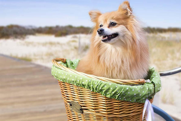 How to Measure Your Dog For a Basket