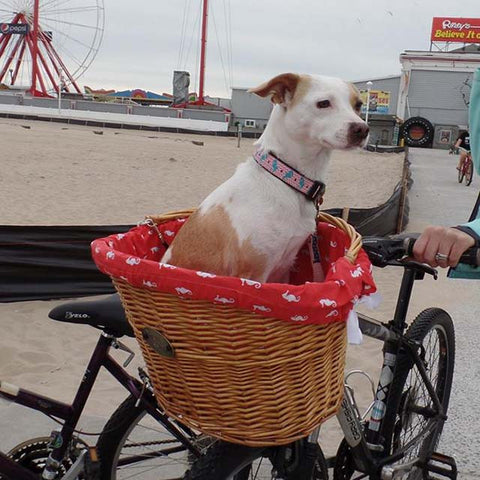 Train your dog to ride in a bike basket