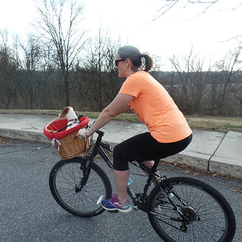 Training your dog to ride in a bicycle basket step 6