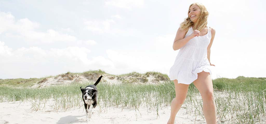 Beach and Dog Canine Sunscreen Banner