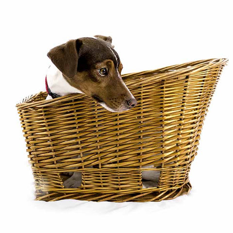 How to measure your dog for a bike basket