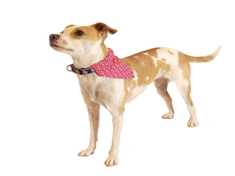 Collar Bandannas - Beach & Dog Co.