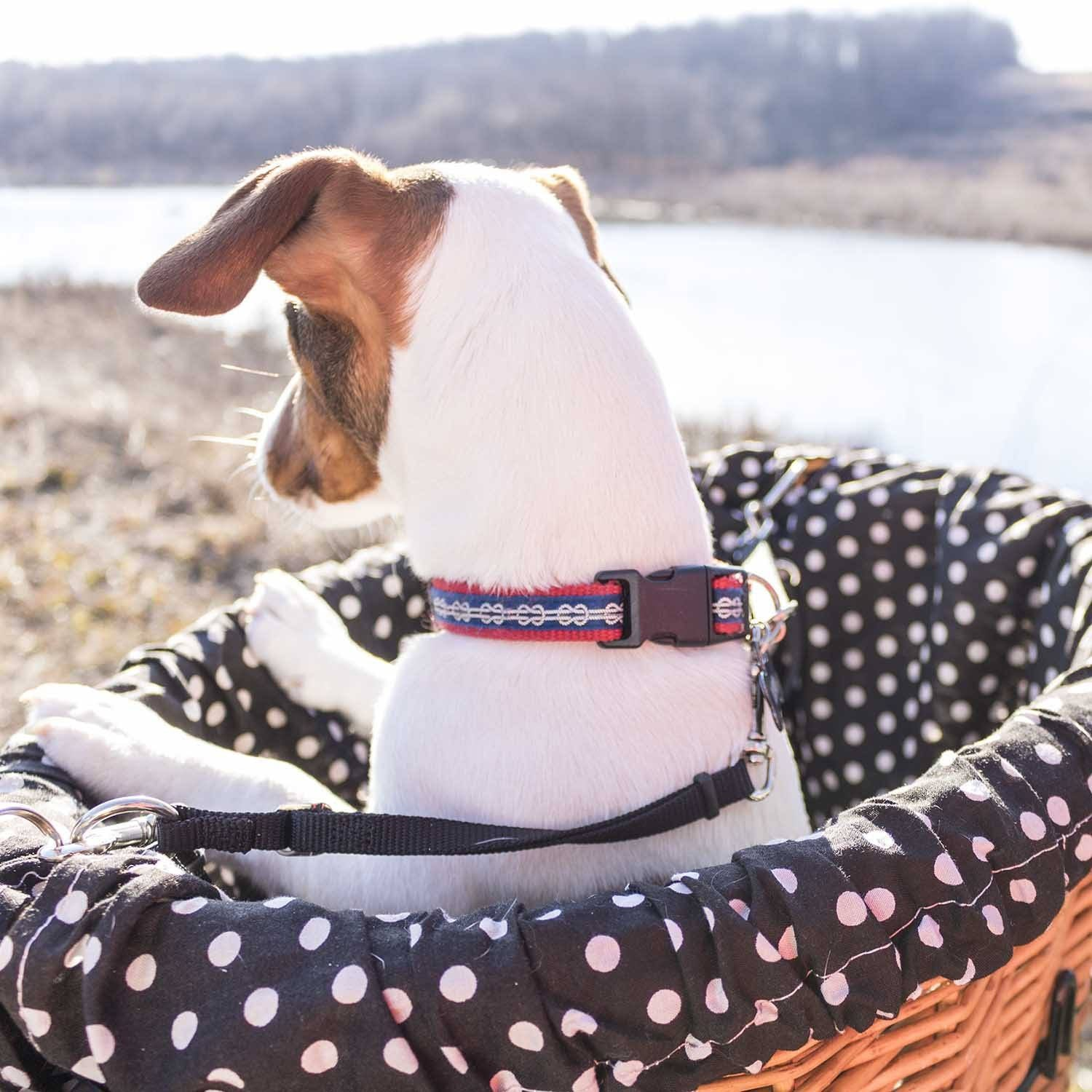 Adjustable Basket Leash - Beach & Dog Co.