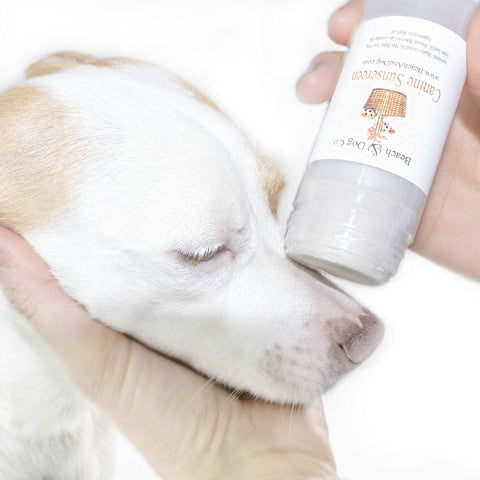 Canine Sunscreen - Zinc and Titanium Dioxide Free - All Natural and Organic Formula - Beach & Dog Co