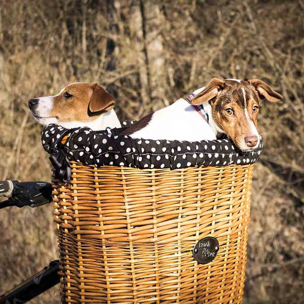 Dogs in lare bike basket-  Beach & Dog Co