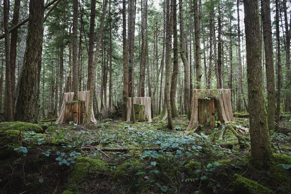 Untitled (3 Stumps)