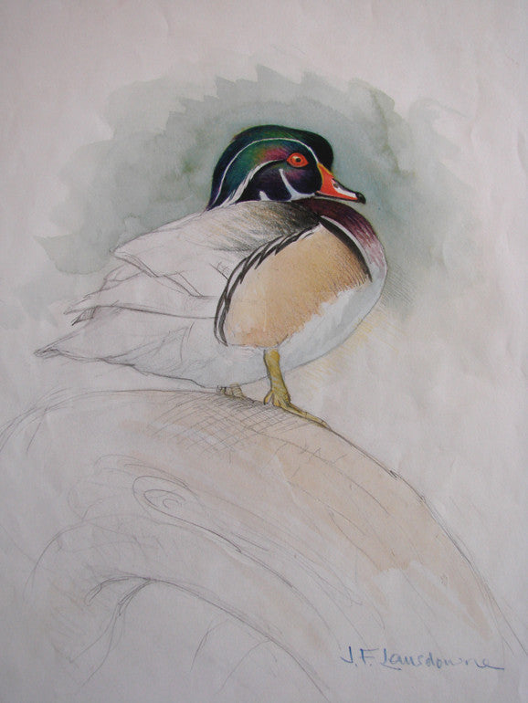 Study for Wood Duck