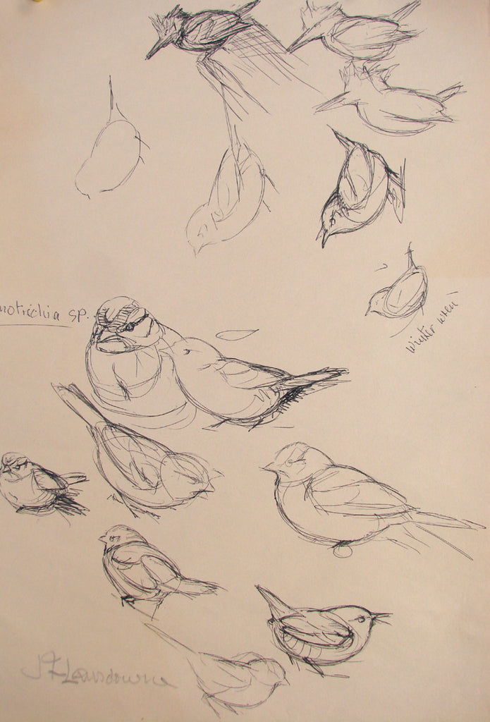 Untitled bird study 3