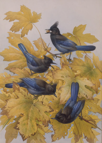 Four Jays and an Acorn