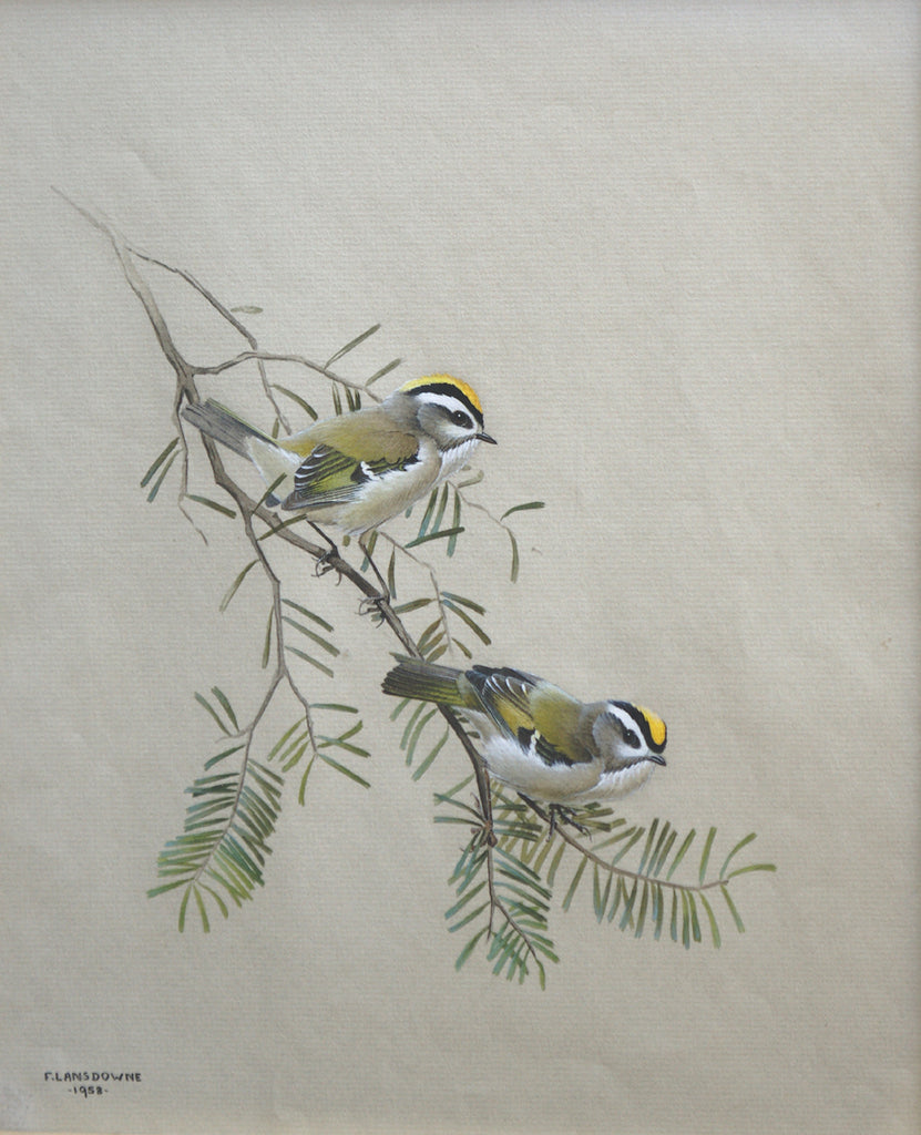 Golden - Crowned Kinglets