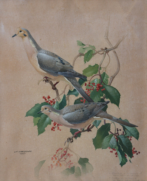 Two Doves (Turtle Doves)