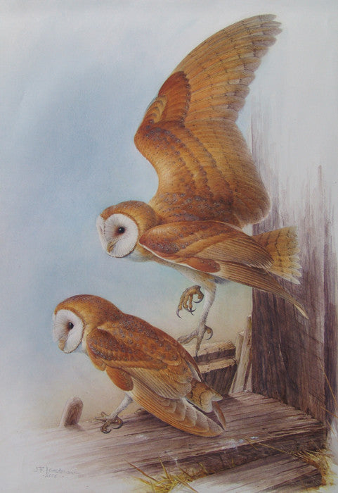 Untitled (Two Owls)