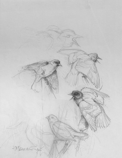 Untitled (Study 5 birds)