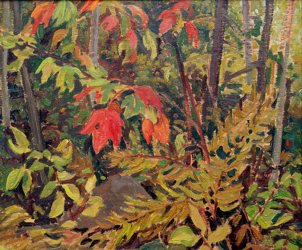 Untitled (forest interior)