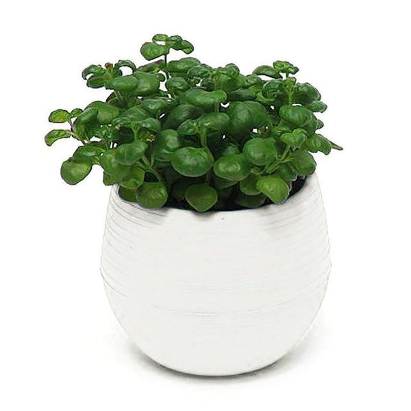 Mini round Shaped Plastic Office Decor Succulents Flower Seed Planter Pot