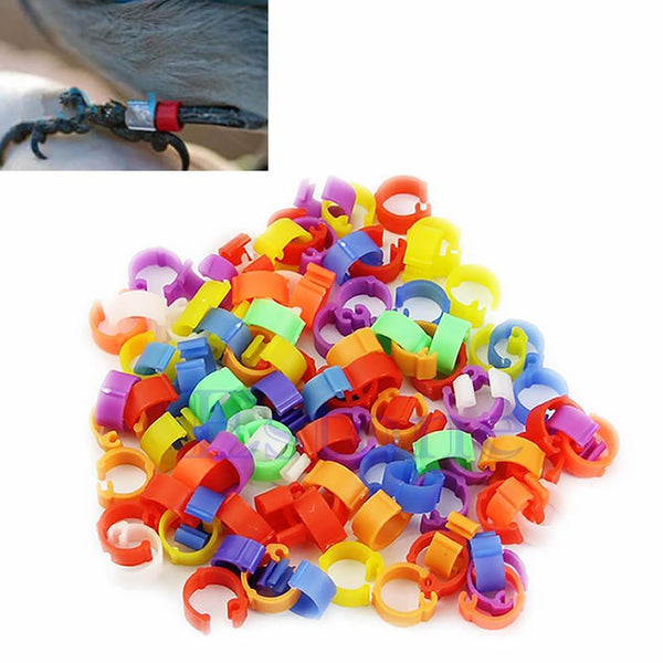100X Chicken Hen Pigeon Leg Poultry Dove Bird Chicks Duck Parrot Clip Rings Band-F1FB