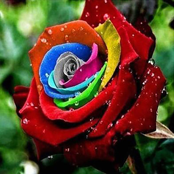 Rainbow Rose Seed 20 Kinds 100 Seeds Bonsai for Flower Pots Planters Home Garden