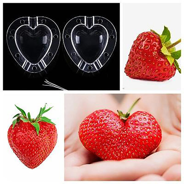 Cucumber WatermelonFruits Growth Growing Forming Mold Star Shape / Heart-shaped Plastic Transparent For Garden Bonsai