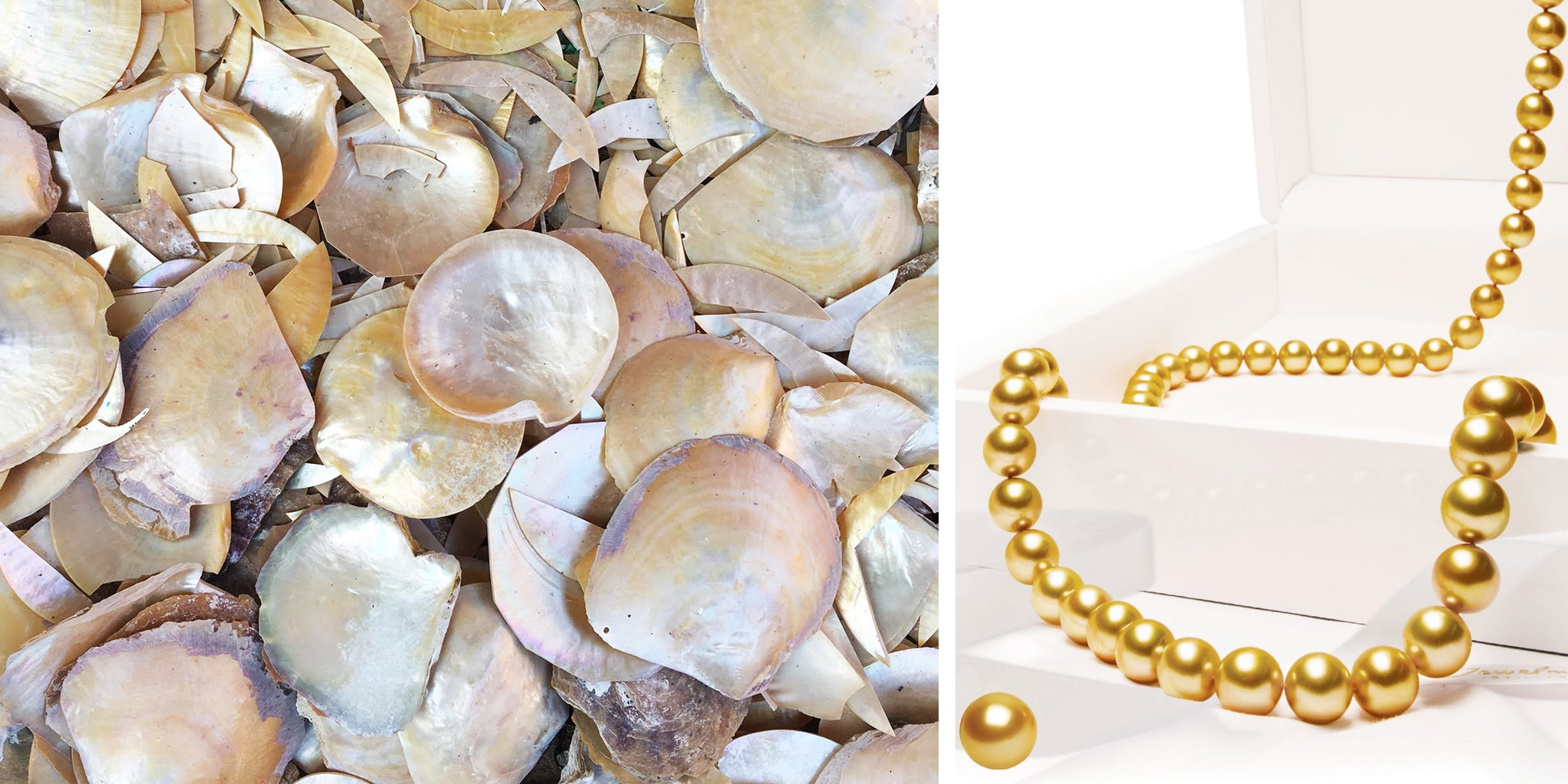 5cce56e26 Once the pearls are harvested, the shells are discarded or sold to be used  in other industries. Fun fact: this shell is featured at the back of the  one ...