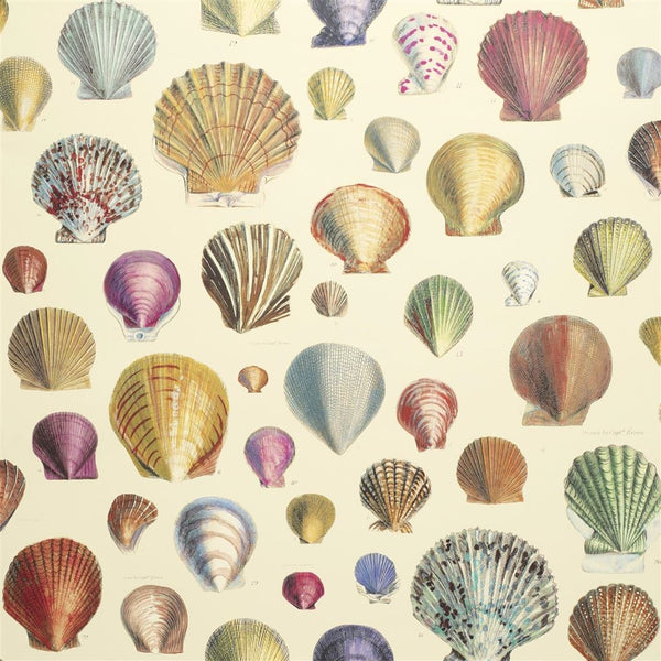 John Derian Picture Book Papers Captain Thomas Browns Shells Sepia Wallpaper