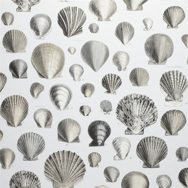 John Derian Picture Book Papers Captain Thomas Browns Shells Pearl Wallpaper