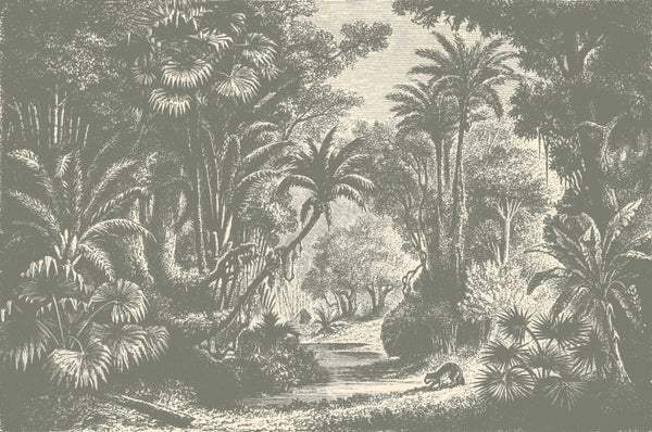 Lost On Goa Jungle Wall Mural In Black Amp White Wallpaper