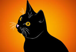 Black Cats: Unlucky no more!