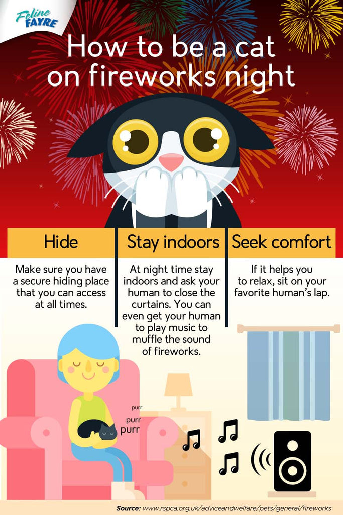How to be a cat on bonfire night
