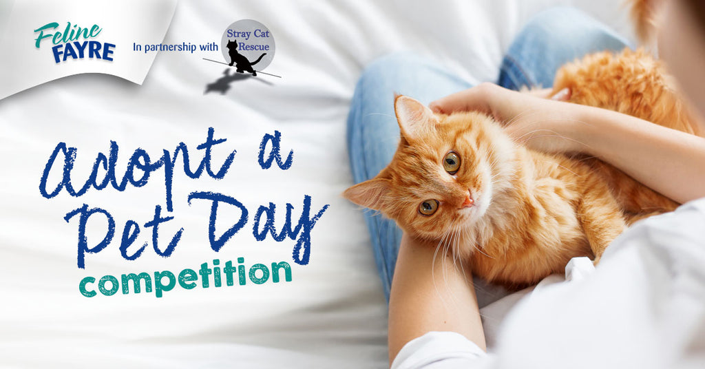 Adopt a Pet Day Competition!