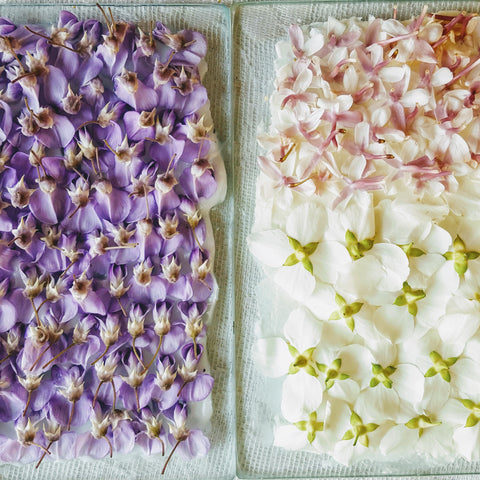 Flower Extracts for Perfumery, Cosmetics & Wellbeing. Friday, Saturday and Sunday 24th,25th, 26th of April 2020