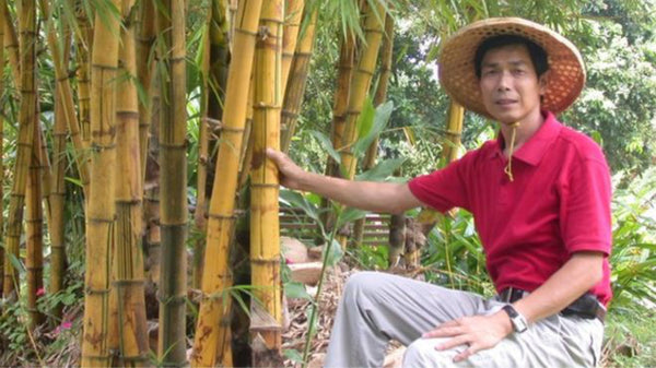 BBC News Explains Why Bamboo is Better