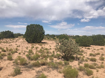 Just Listed - Lot on Palomino Road in Placitas - Potential Commission Savings $2,500