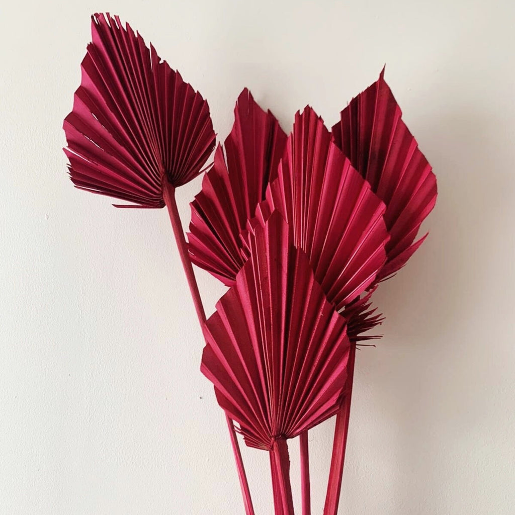 Dried Palm Spear Pink - honeybee blooms