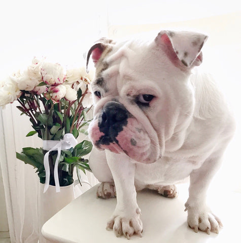 Bulldog puppy peonies bridal bridemaids robes gowns